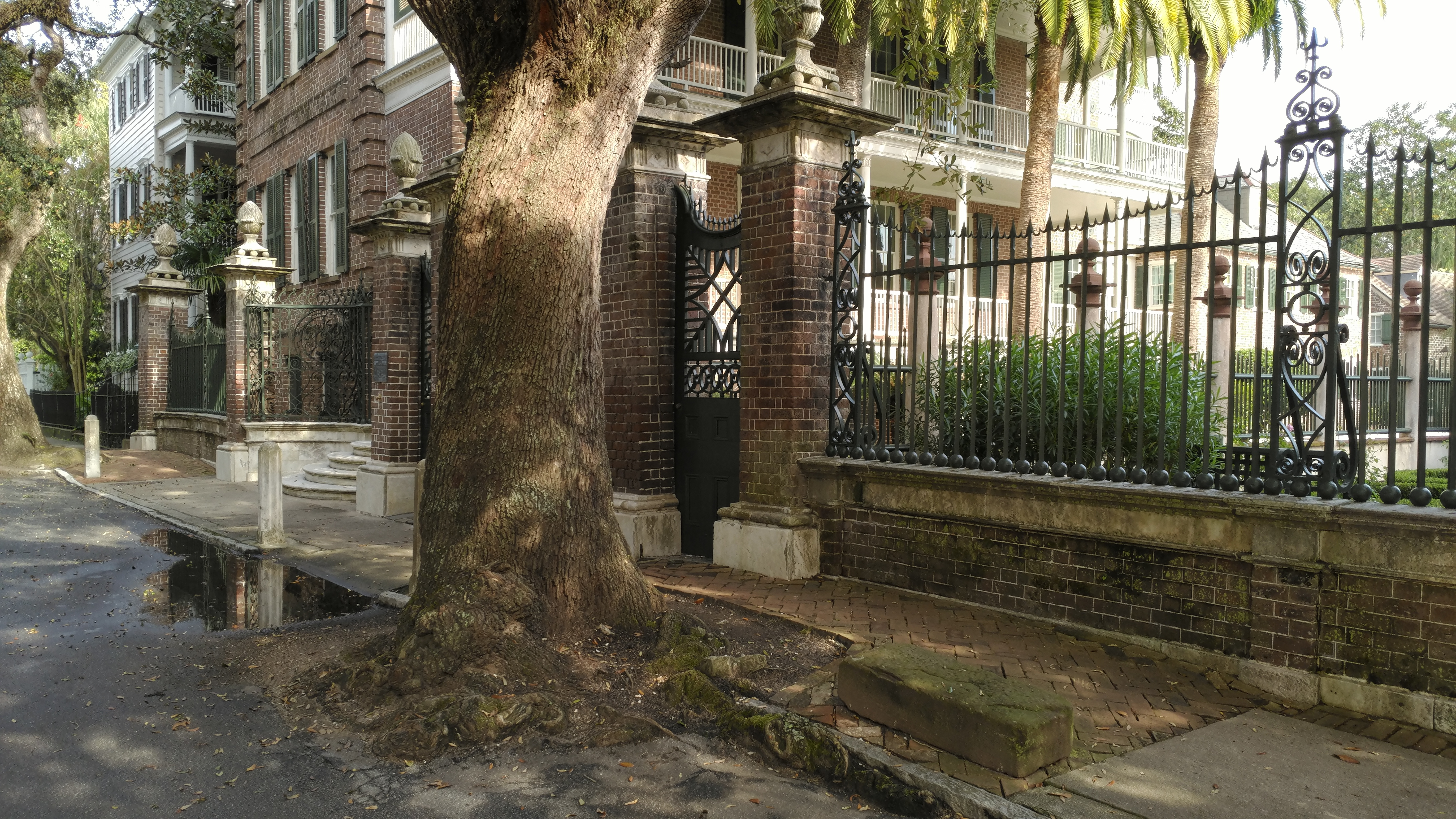 Trees in the Street – Charleston, SC – Keith O\'Herrin, Ph.D.